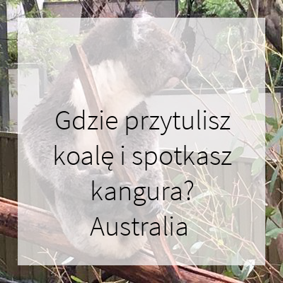 Gdzie przytulisz koalę i spotkasz kangura? Australia