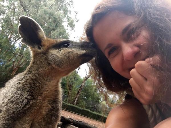 życie w Australii, kangur