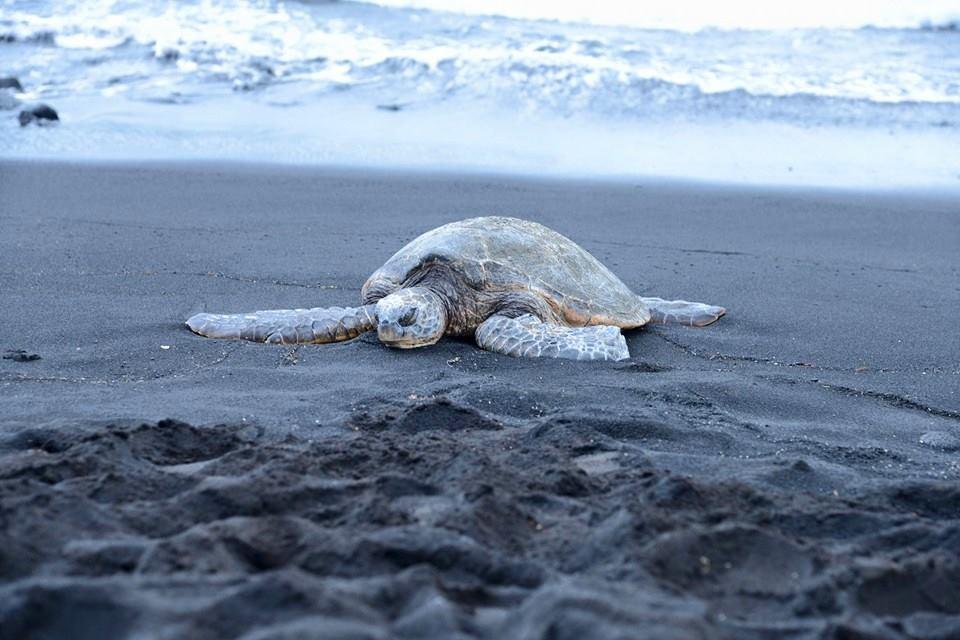 Plaża Zielonego Piasku, Hawaje warto zobaczyć na Hawajach