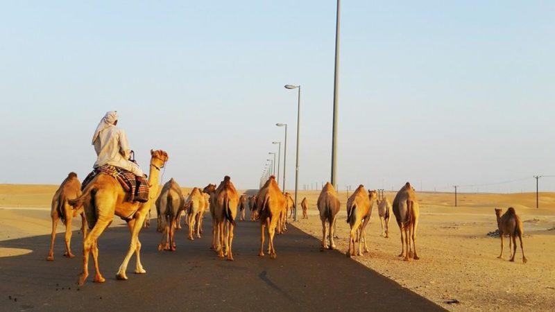 Co zobaczyć w Dubaju
