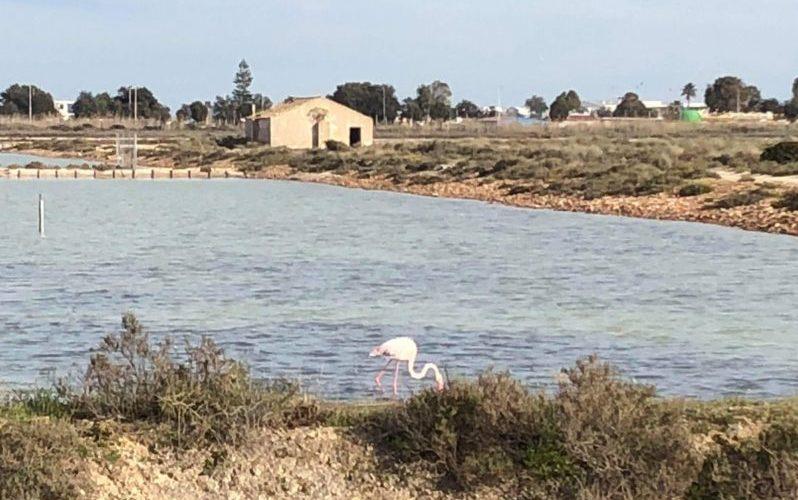 Cagliari co zobaczyć flamingi