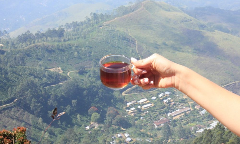 Zielona herbata Sri Lanka